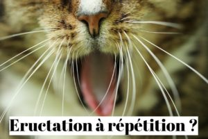 Éructation et rots à répétition: et si c'était le stress?